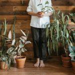 Help je tuin- en kamerplanten de winter door